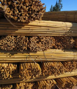 Bambou Tuteur