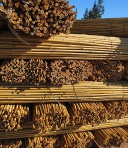 Bambou Tuteur Et Agraphe