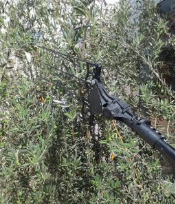 Récolte D'olive